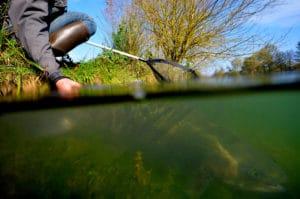 Respecter le poisson durant la pêche