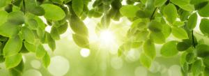 Décor de feuilles vertes