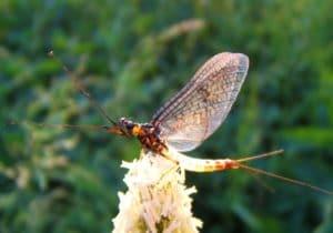 Insecte sur une fleur Moulin de Gémages