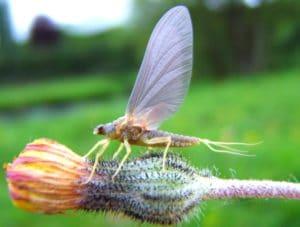 Insecte sauvage sur le parcours de pêche