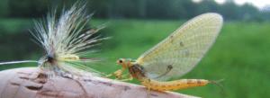 Réaliser la mouche