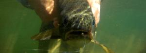Capture du poisson sous l'eau