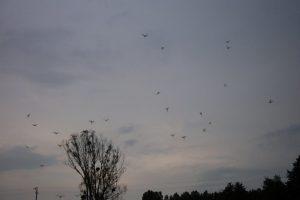 Oiseaux en vol Moulin de Gémages