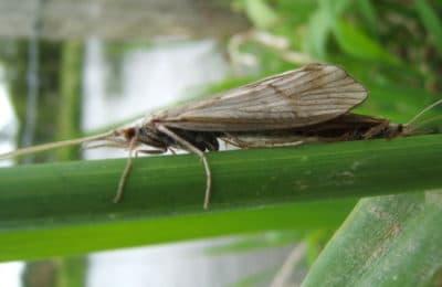 Papillon sauvage parcours de pêche Moulin de Gémages