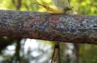 Ecosystème au bord du parcours de pêche a la mouche