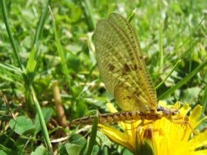Insecte sauvage sur une fleur